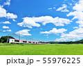 千葉県 夏の青空と田んぼを走る成田エクスプレス 55976225