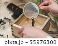 【浅草きんぎょ 金魚すくい】 55976300