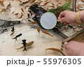 【浅草きんぎょ 金魚すくい】 55976305