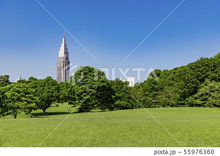【芝生公園】 55976360