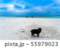 沖縄 竹富島 人気スポットのコンドイビーチ 黒猫と観光客 55979023