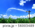 南国・喜界島のサトウキビ畑とスプリンクラー 56003489