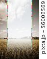 韓国 秋 収穫 56006569