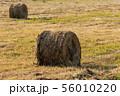 Yellow hay rolls on mowed field, rural landscape 56010220