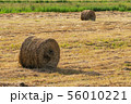 Yellow rolls of hay on mowed field on sunny day 56010221