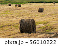 Rural landscape, view of golden hay rolls 56010222