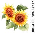 水彩で描いた大輪の向日葵 56015616