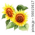 水彩で描いた大輪の向日葵 56015617
