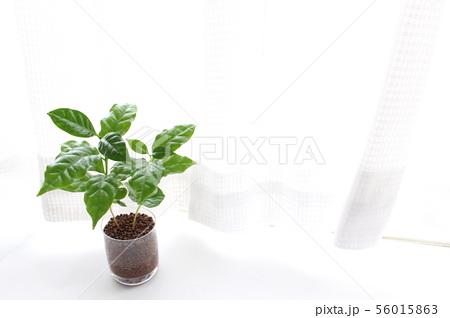 明るい観葉植物 56015863