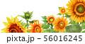 ブログ用ヘッダ画像ひまわり 56016245