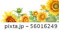 ブログ用ヘッダ画像ひまわり 56016249