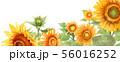 ブログ用ヘッダ画像ひまわり 56016252