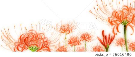ブログ用ヘッダ画像ヒガンバナ 56016490