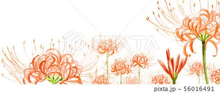 ブログ用ヘッダ画像ヒガンバナ 56016491