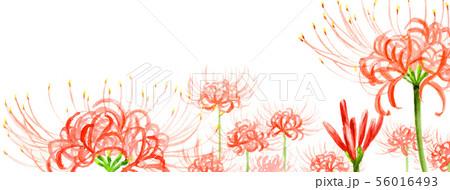 ブログ用ヘッダ画像ヒガンバナ 56016493