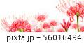 ブログ用ヘッダ画像ヒガンバナ 56016494