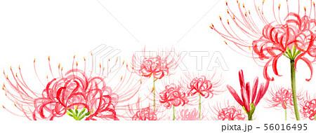 ブログ用ヘッダ画像ヒガンバナ 56016495