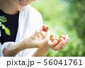 女性 収穫 トマト 畑 56041761