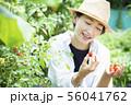 女性 収穫 トマト 畑 56041762