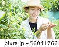 女性 収穫 トマト 畑 56041766