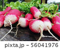 harvest ripe radishes with green leaves on the table 56041976