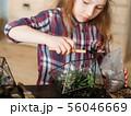 diy florarium home gardening class vase succulents 56046669