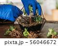 diy florarium home gardening class succulents 56046672
