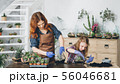 diy florarium creative hobby planting succulents 56046681