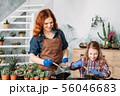 diy florarium family business planting succulents 56046683