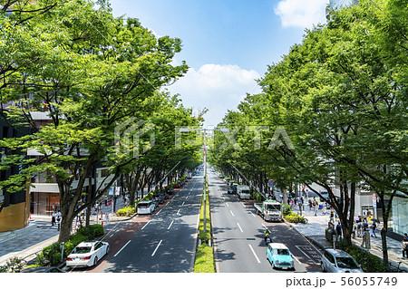 【東京都】表参道の風景 56055749