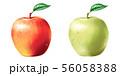 りんご 青りんご 56058388