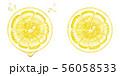 レモンの輪切り 56058533
