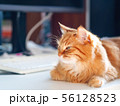 Cute ginger cat lying on white table near computer 56128523