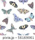 butterflies and moths 56169061