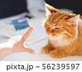 Cute ginger cat lying on white table near computer 56239597