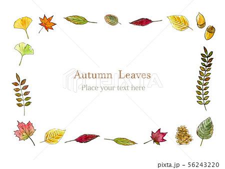 秋の葉 水彩イラスト フレーム 56243220