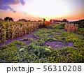 Evening view of garden 56310208
