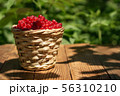 basket with currants 56310210