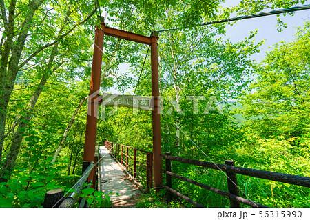 平湯大滝までの途中にあるかもしか橋 56315990