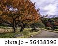 (東京都)小石川後楽園 紅葉 56438396