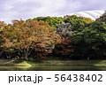 (東京都)小石川後楽園 紅葉 56438402