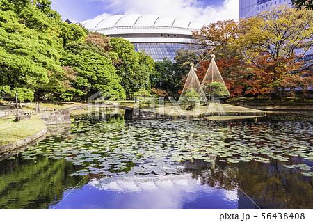 (東京都)小石川後楽園 紅葉 56438408