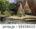 (東京都)小石川後楽園 紅葉 56438410