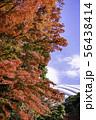 (東京都)小石川後楽園 紅葉 56438414