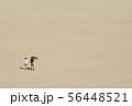 鳥取砂丘 56448521