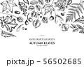 Floral design with black and white rowan, rowan, acorn, buckeye, fern, maple, birch, maple leaves 56502685