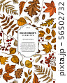 Card design with colored rowan, rowan, acorn, buckeye, fern, maple, birch, maple leaves, lagurus 56502732