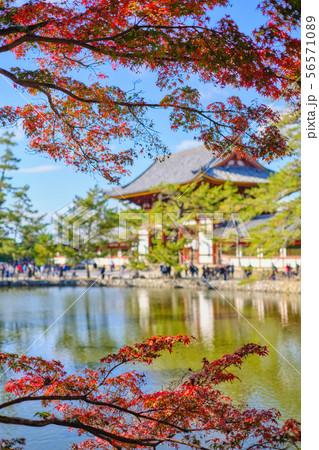 東大寺と紅葉 56571089