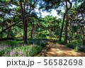 achasan ecological park 56582698