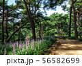 achasan ecological park 56582699